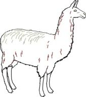 black and white drawing of a llama