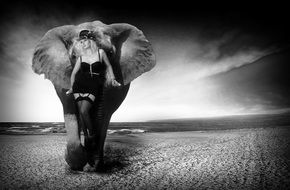 black and white photo of an elephant on the beach
