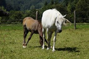 young foal and mare