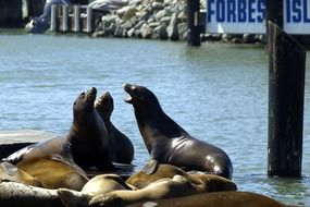 fur seals near the water