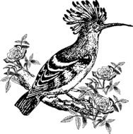 hoopoe as a graphic image