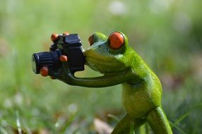 funny frog with camera