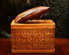 cockroach on wicker basket