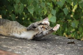 young cat playing with tree leaves