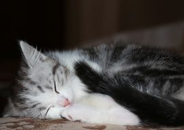 sleeping sweet kitten