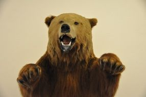 stuffed bear in museums