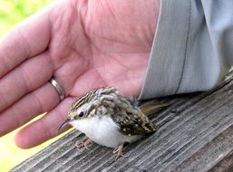 small bird smaller than human hand