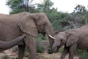 elephant family in Namibia