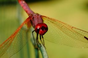 awesome beautiful Dragonfly