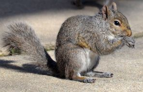 beautiful and cute Squirrel Animals