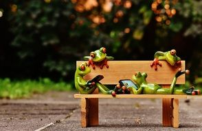 frog on a wooden bench in the park