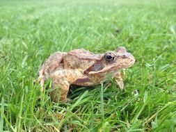 fascinating Frog Toad