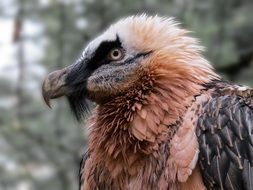 Head of wild vulture close-up on blurred background