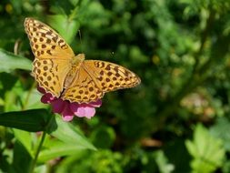 spotted yellow butterfly on a bright flower
