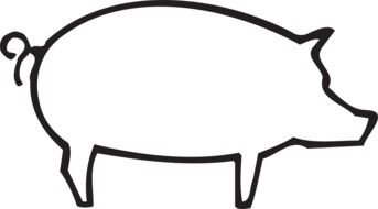 outlined drawing of a pig