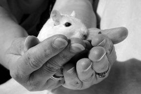 photo of a white mouse on hand