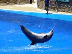 smart jumping dolphin in the water park