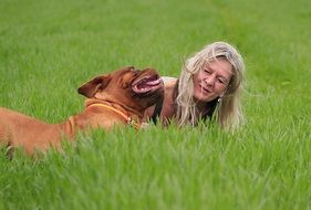 bordeaux dog lying on the meadow with his owner