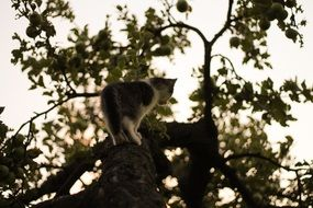 Cat Climbing on Tree