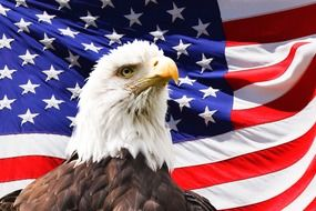 bald Eagle in front of American Flag, collage