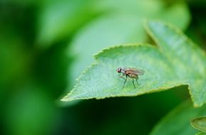 fly on a green leaf close-up