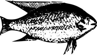 a child\'s drawing of African fish