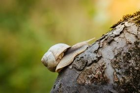 snail on the tree bark
