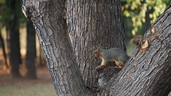 Squirrel on a tree in a park