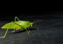 green grasshopper on the surface