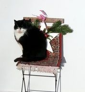domestic cat on a decorative chair