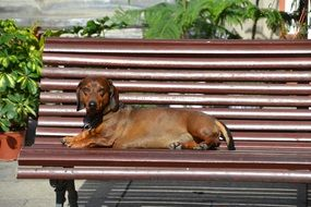 brown dog on a bench under the bright sun