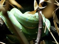 Snake Reptile Zoo Animal Wild