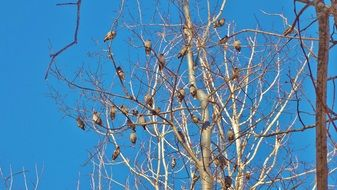 flock of birds sitting on tree branches