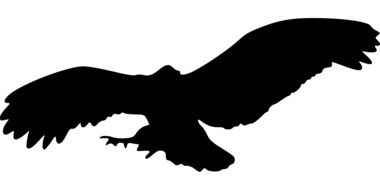 black silhouette of a bird of prey