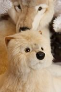 charming puppy of arctic wolf