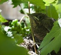 Bird cub on leaves