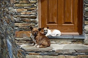 dogs near the door of the house