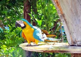 Tropical Colorful Parrot