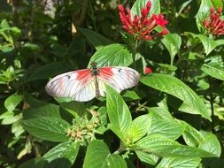 white butterfly on a green plant with red flowers