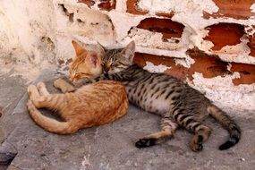 Young kittens sleeping