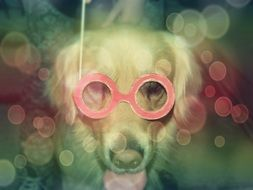 dog in red glasses funny pattern