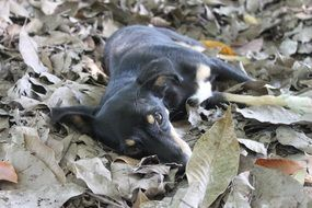 Dog on leaves