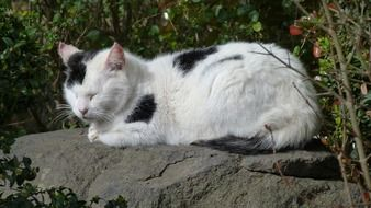 the cat is sleeping on the stone