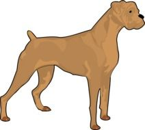Brown boxer dog clipart