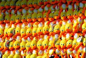 yellow plush ducklings on a shop window