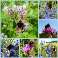bees on flowers photo collage