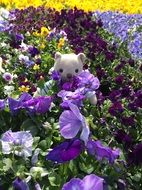 teddy bear among flower beds