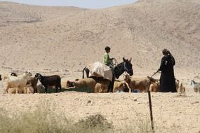 Bedouins in the desert