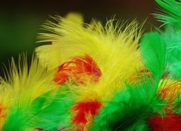 yellow, green and red feathers