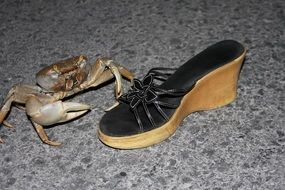 Crab and a woman\'s Shoe
